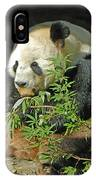 Tian Tian Hanging Out In Panda Man Cave IPhone Case