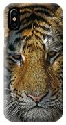 Tiger 5 Posterized IPhone Case