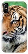 Tiger Face IPhone Case