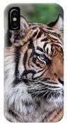 Sumatran Tigress Portrait  IPhone Case