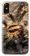 Tiger Spider  IPhone Case