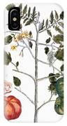 Tomato Plant, 1735 IPhone Case