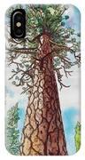 Towering Ponderosa Pine IPhone Case