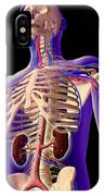 Transparent View Of Human Body Showing IPhone Case