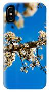 Tree Blossom On A Sunny Day In Spring IPhone Case