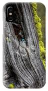 Tree Swallow IPhone Case