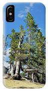 Trees On The Edge 1 IPhone Case