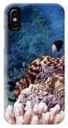 Tridacna Squamosa  IPhone Case