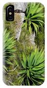 Agave Plants On Rocky Slope IPhone Case