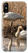 Trumpeter Swan Morning IPhone Case
