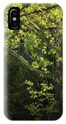 Branches Of Lovely Light IPhone Case