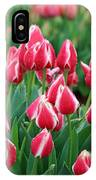 Tulips - Candy Apple Delight 02 IPhone Case