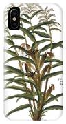 Turkish Corn, 1735 IPhone Case