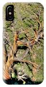 Twisted Bristlecone IPhone Case