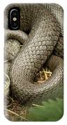 Two Intertwined Grass Snakes Lying In The Sun IPhone Case