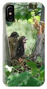 Two Red Shouldered Hawk Chicks Calling Mom  IPhone Case