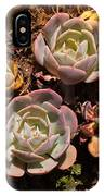 Two Succulents  IPhone Case