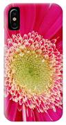 Vibrant Pink Gerber Daisy IPhone Case