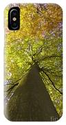 View To The Top Of Beech Tree IPhone Case