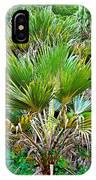 Waimea Palm Study 2 IPhone Case