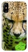 Walking Cheeta IPhone Case