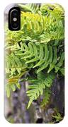 Wall With Fern IPhone Case