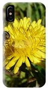 Wasp Visiting Dandelion IPhone Case