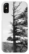 Weathered Tree IPhone Case