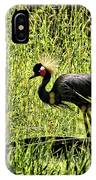 West African Crowned Crane IPhone Case