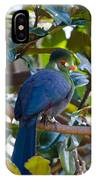 White-cheeked Turaco IPhone Case