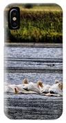 White Pelicans Kootenay Lake IPhone Case