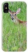 White-tailed Deer Bedded Down In Tall Grass IPhone Case