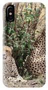 Wild Cheetahs IPhone Case