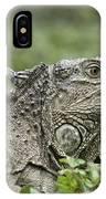 Wild Green Iguana Iguana Iguana At Los IPhone Case