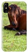 Wild Mustang At Rest IPhone Case