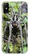Wolf Spider Hogna Sp Male, Mindo IPhone Case