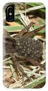 Wolf Spider With Babies IPhone Case