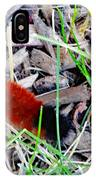 Wooly Bear 1 IPhone Case