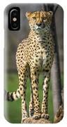 World's Fastest Land Animal IPhone Case