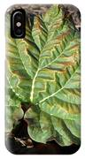 Wrinkled Green Rhubarb Leaf IPhone Case
