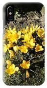 Yellow Crocus 1 IPhone Case