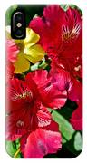 Yellow Sorrel Peeking Out Through Red Azaleas At Pilgrim Place In Claremont-california  IPhone Case