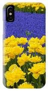 Yellow Tulips And Blue Muscari In Dutch Garden IPhone Case