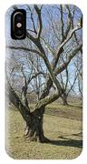 Yellowwood Tree In Winter IPhone Case