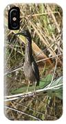 Young Green Heron  IPhone Case