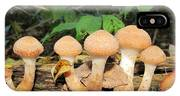 Young Honey Mushrooms IPhone Case