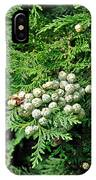 Young Seed Cones Of Lawson Cypress IPhone Case