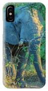 Zimbabwe Bull Elephant IPhone Case