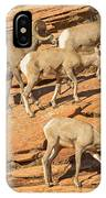 Zion Big Horn Sheep IPhone Case