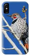 Northern Flicker Woodpecker IPhone Case